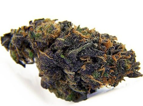 Blackberry Gum Autoflower