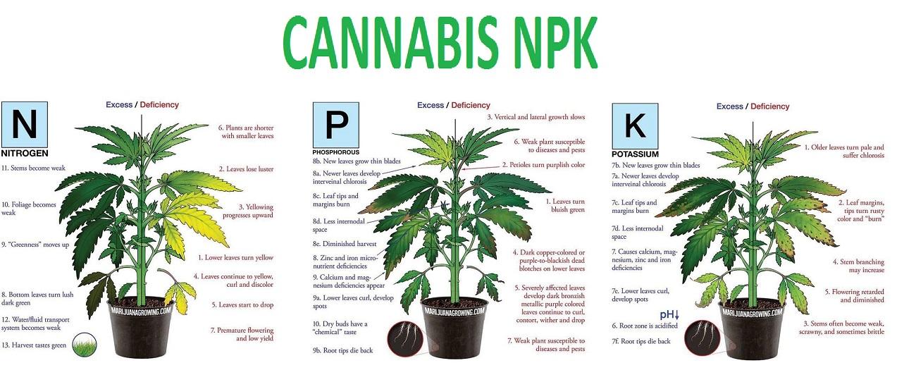 Cannabis NPK - Autoflower Seed Shop